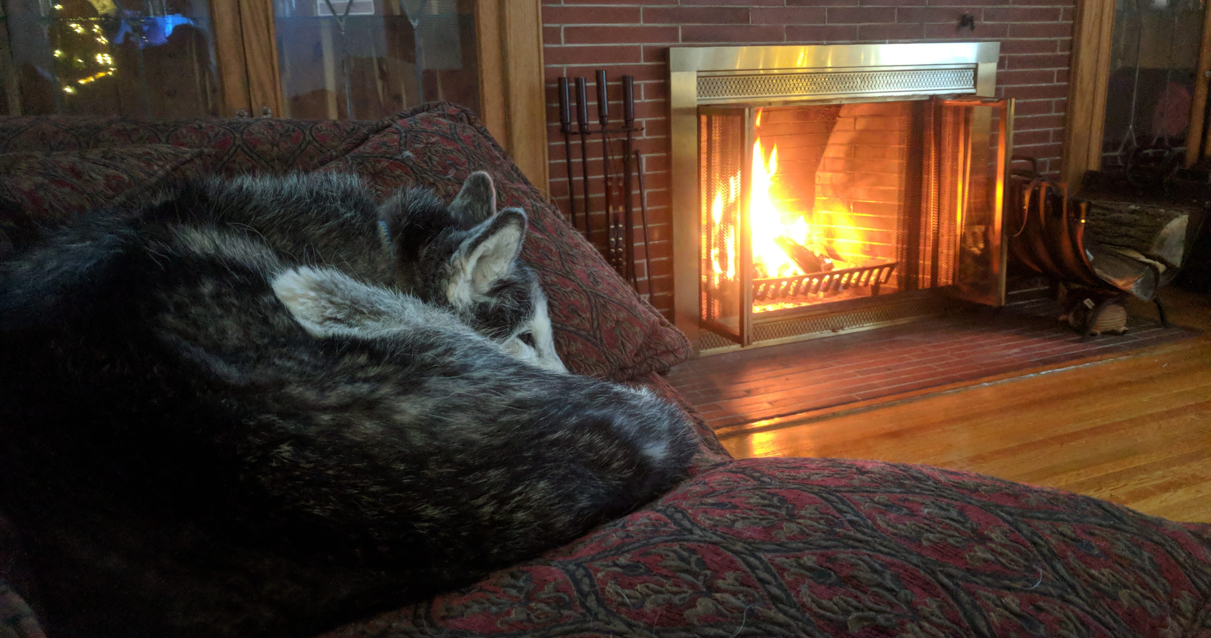Rochester NY Pet Sitting - Xandrea infront of fire place