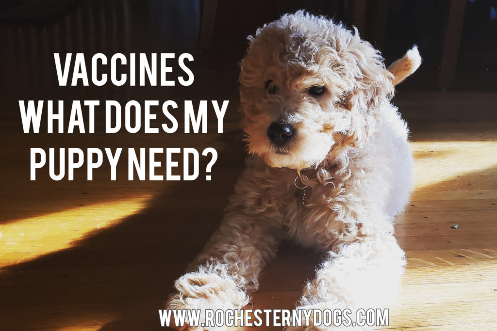 What vaccines does my puppy need