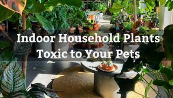 Household Indoor Toxic Plants