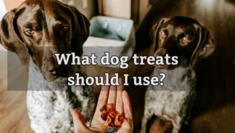 What dog treats should I use